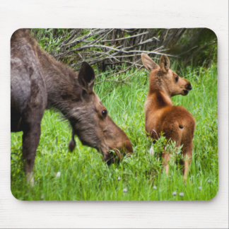 Two Alert Moose Mother And Baby Mouse Mat