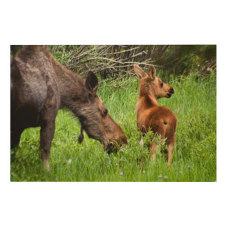 Two Alert Moose Mother And Baby Wood Wall Decor