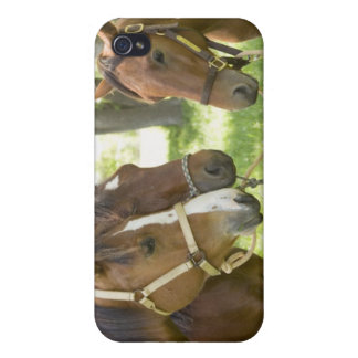 Two American Quarter horses standing in shade iPhone 4 Cover