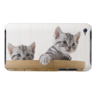 Two American Shorthair Kittens Barely There iPod Cases