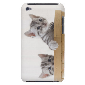 Two American Shorthair Kittens Barely There iPod Cover