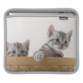 Two American Shorthair Kittens iPad Sleeve