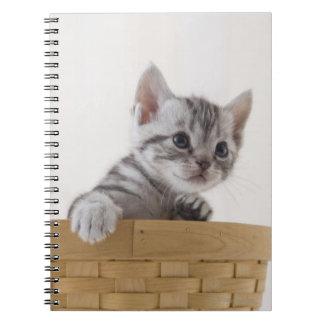 Two American Shorthair Kittens Spiral Notebook