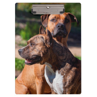 Two American Staffordshire Clipboard