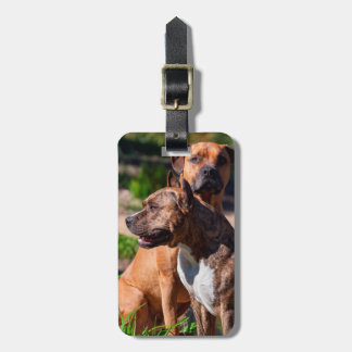 Two American Staffordshire Luggage Tag