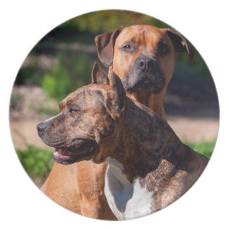 Two American Staffordshire Party Plate