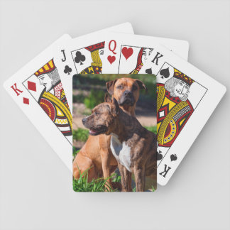 Two American Staffordshire Playing Cards