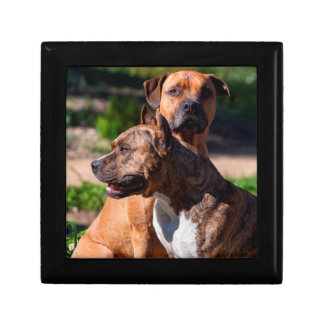 Two American Staffordshire Small Square Gift Box
