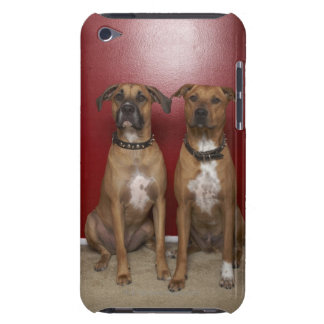 Two american stanford terriers sitting iPod touch cases