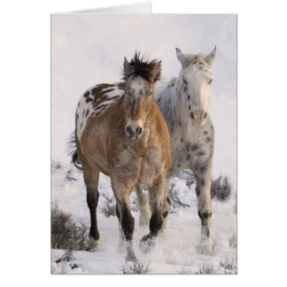 Two Appaloosas Horse Greeting Card