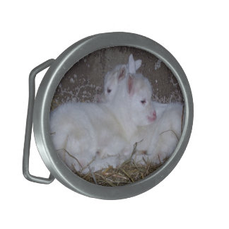 Two Baby Goats in Straw Belt Buckles