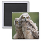 Two Baby Great Horned Owls Magnet