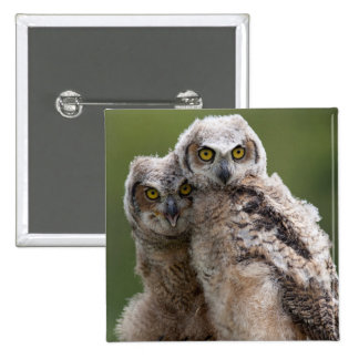Two Baby Great Horned Owls Perching On A Branch 15 Cm Square Badge