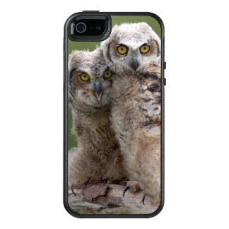 Two Baby Great Horned Owls Perching On A Branch OtterBox iPhone 5/5s/SE Case