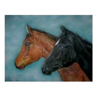 Two baby horses black foal chestnut foal portrait post cards