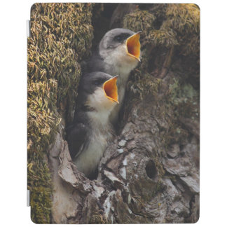 Two Baby Tree Swallows iPad Cover
