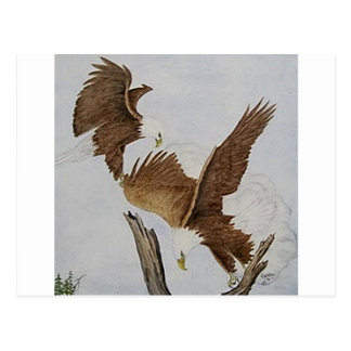 Two Bald Eagles in Flight Post Card