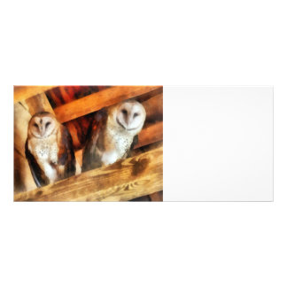 Two Barn Owls Custom Rack Cards