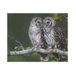 Two Barred Owls Waiting for Their Mother Gallery Wrap Canvas