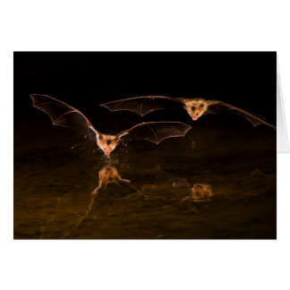 Two bats flying over water, Arizona Card