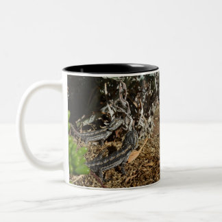Two_Bearded_Dragons_Two_Toned_Coffee_Mug. Two-Tone Coffee Mug