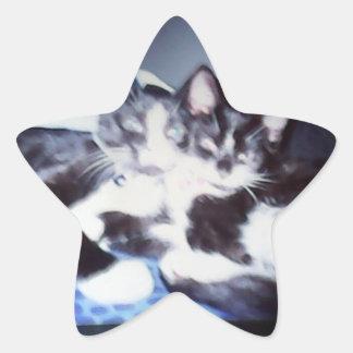 Two beautiful cats star sticker