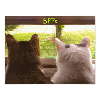 Two BFF Cats Gazing Out of The Window Poster Art Photo