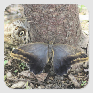 Two Big Moths Sticker