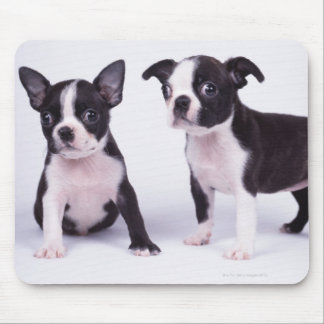 Two black and white puppies mouse pad
