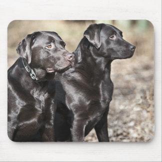 Two Black Labrador retrievers Mouse Pad