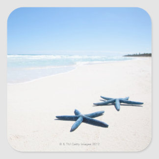 Two blue starfish at water's edge on tropical 2 square sticker