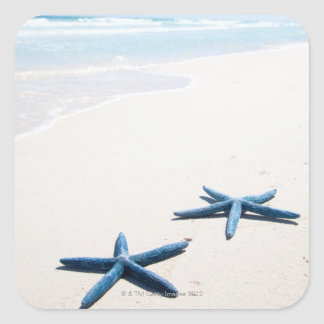 Two blue starfish at water's edge on tropical square sticker