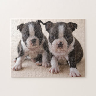 Two Boston Terrier Puppies Jigsaw Puzzle