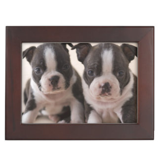 Two Boston Terrier Puppies Keepsake Box