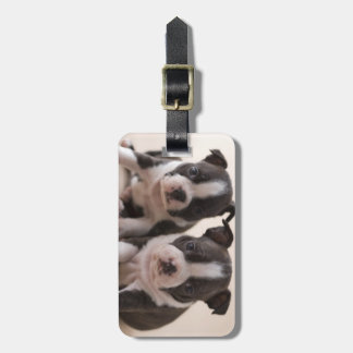 Two Boston Terrier Puppies Luggage Tag