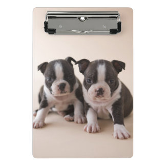 Two Boston Terrier Puppies Mini Clipboard