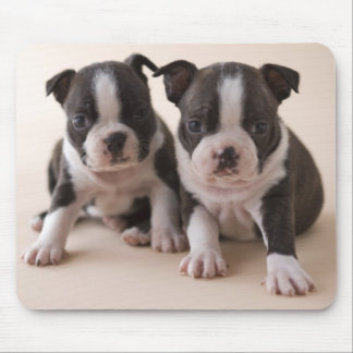 Two Boston Terrier Puppies Mousepads