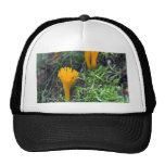 Two Bright Orange Yellow Wild Mushrooms On Moss Co Mesh Hats