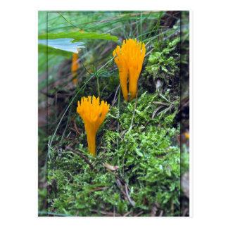 Two Bright Orange Yellow Wild Mushrooms On Moss Co Postcard