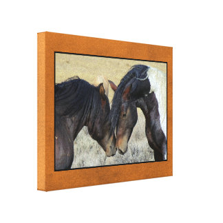 Two Brown Wild Horses Nuzzling Canvas Print