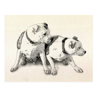 Two Bull Terriers Postcard
