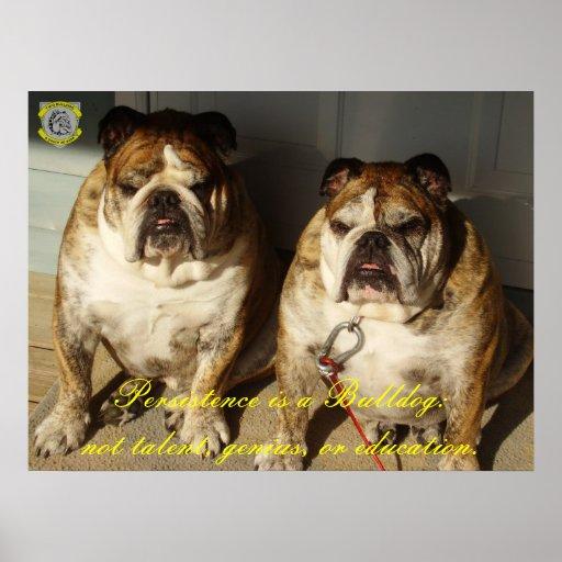 Two Bulldog Persistence is a Bulldog Framing Print