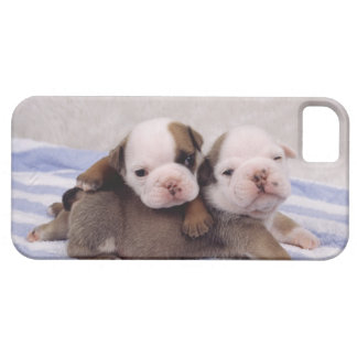 Two bulldog puppies on towel case for the iPhone 5