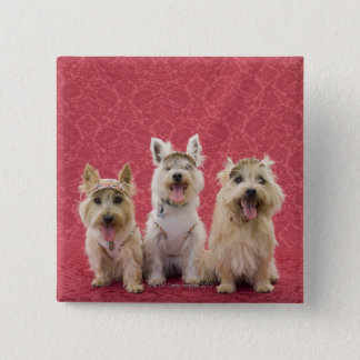 Two cairin terriers and one westie 15 cm square badge