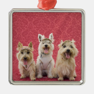 Two cairin terriers and one westie christmas ornament