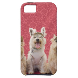 Two cairin terriers and one westie iPhone 5 case