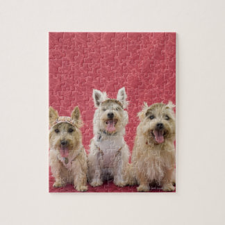 Two cairin terriers and one westie jigsaw puzzle