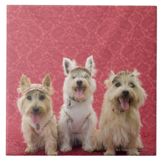 Two cairin terriers and one westie tile