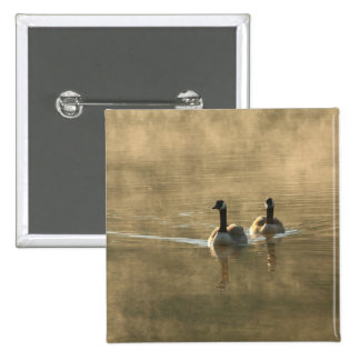 two canada geese swimming on the river by sunrise button