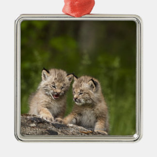 Two Canada Lynx Kittens Playing On A Log Christmas Ornament